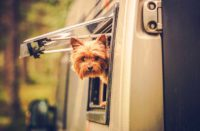 how-to-rv-with-pets