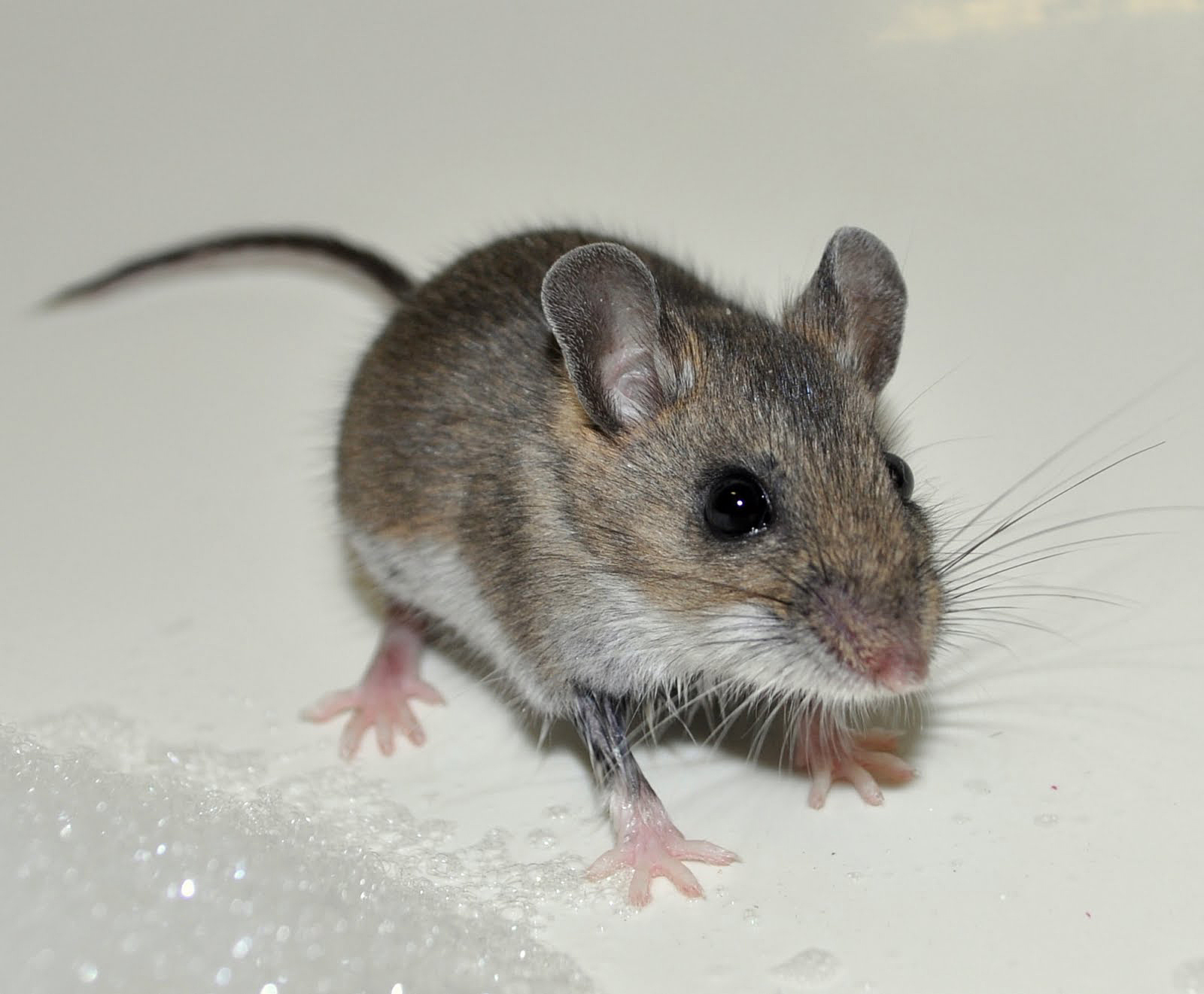 Mouse Issues In RV